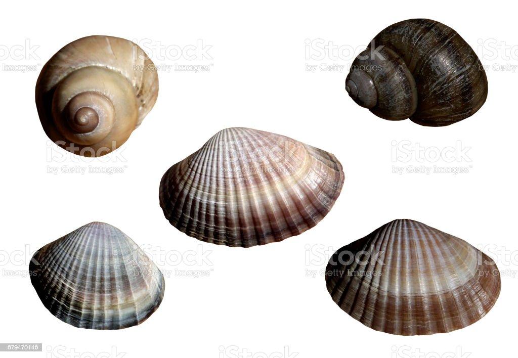 Set with  beautiful river seashells. stock photo