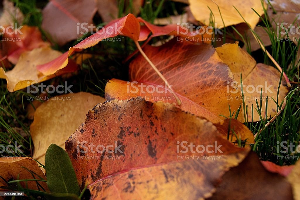 Set Within Grass royalty-free stock photo