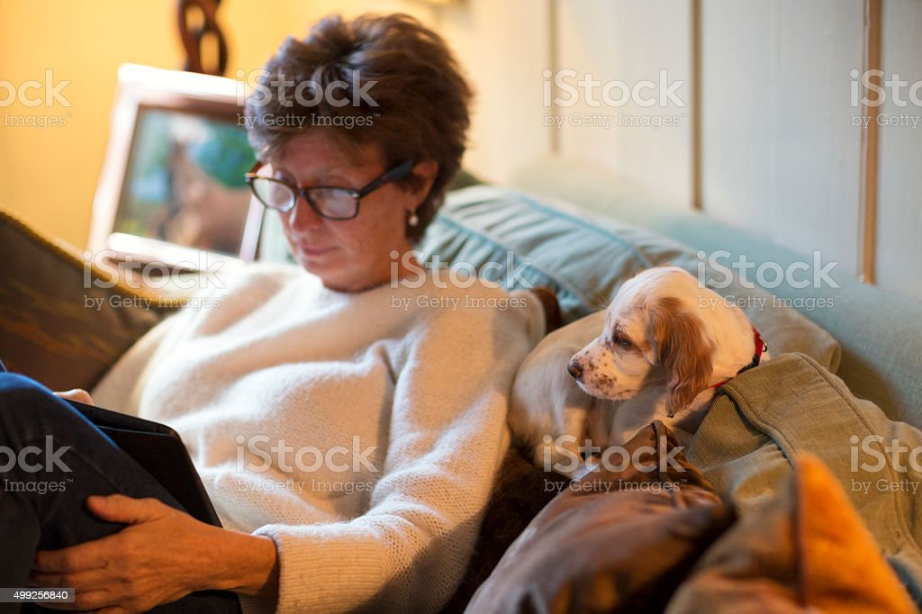 Setter puppy with owner using a tablet,  Oslo Norway stock photo