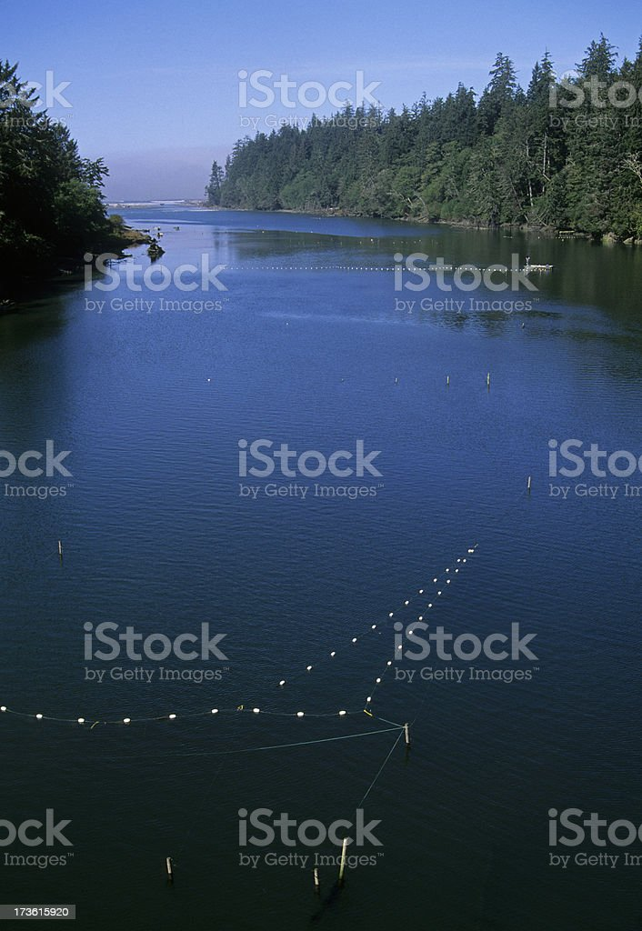 Setting salmon nets in Quinault River stock photo