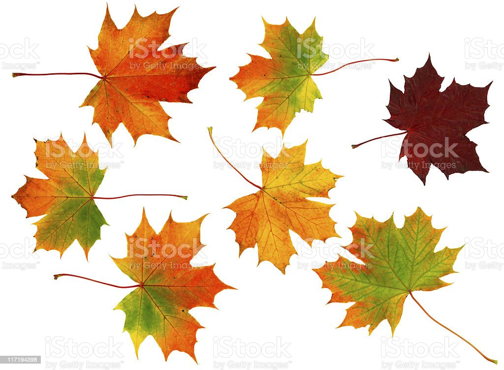 Seven Autumn leaves royalty-free stock photo