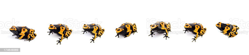 Seven frogs stock photo