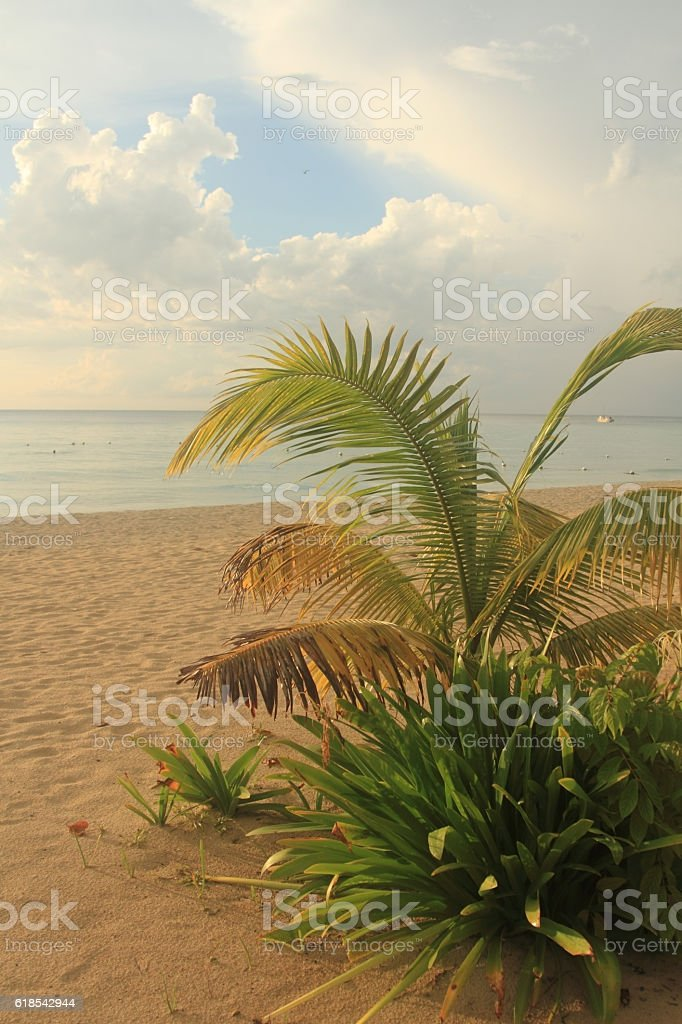 Seven mile beach. Jamaica, Negril royalty-free stock photo