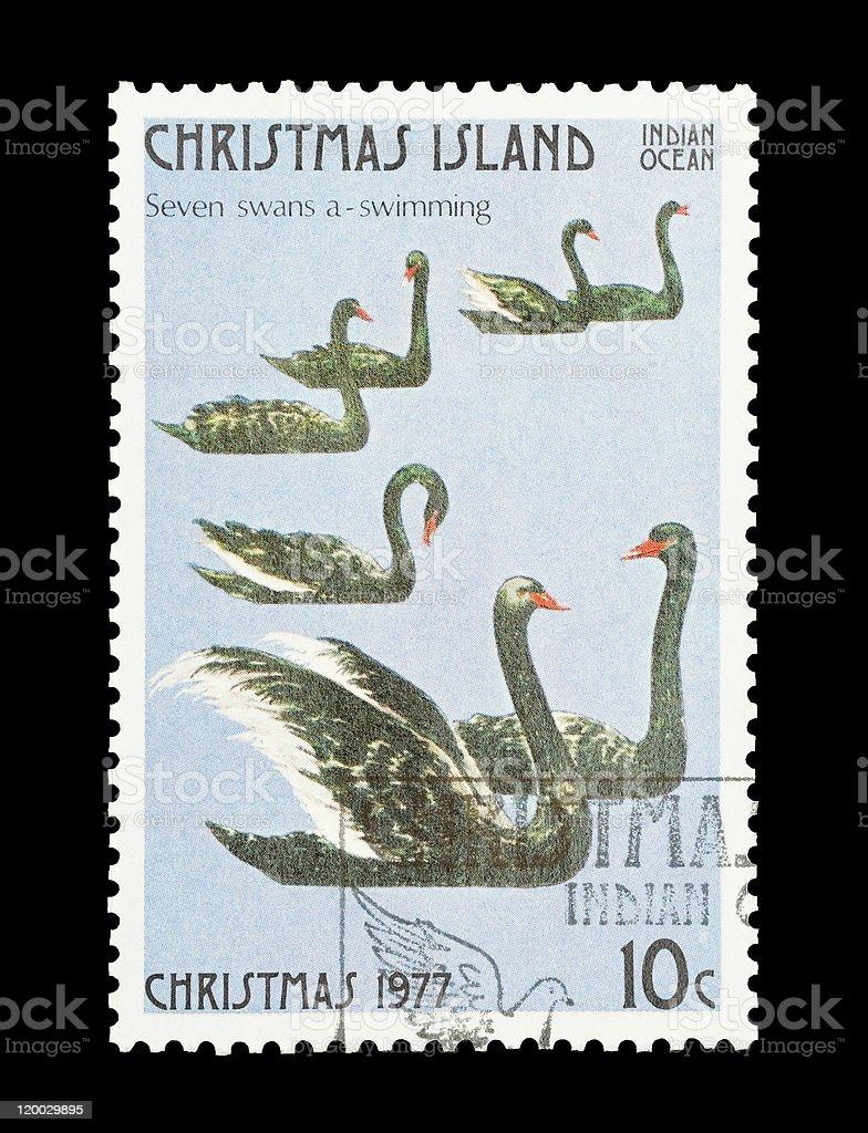seven swans swimming stock photo