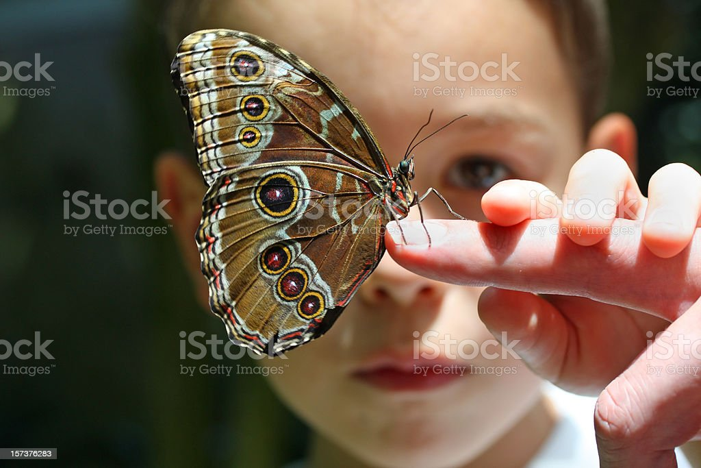 Seven year old boy/child with butterfly on finger stock photo