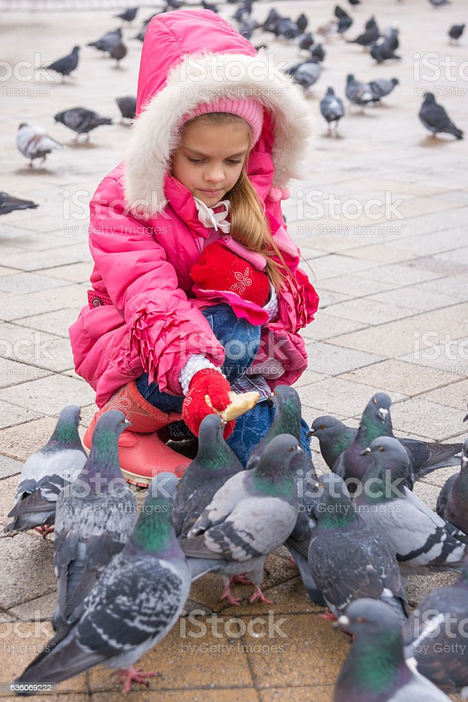 Seven-year girl feeding pigeons with bread in the street stock photo