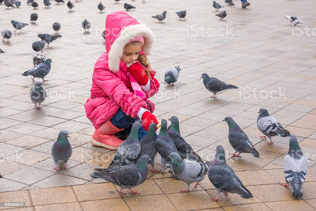 Seven-year girl in the winter feeding pigeons in the street stock photo