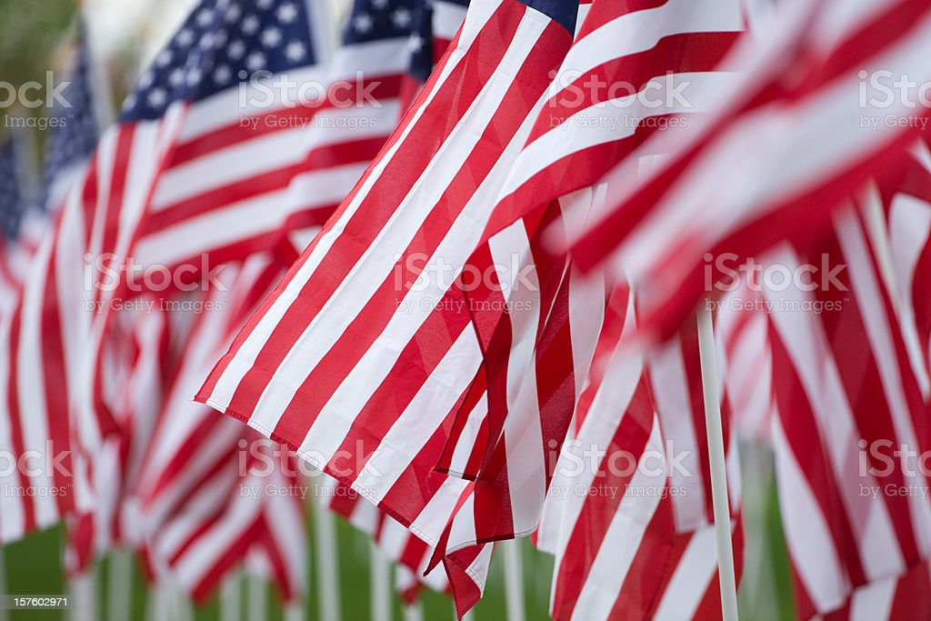 Several American flags blowing in the wind stock photo