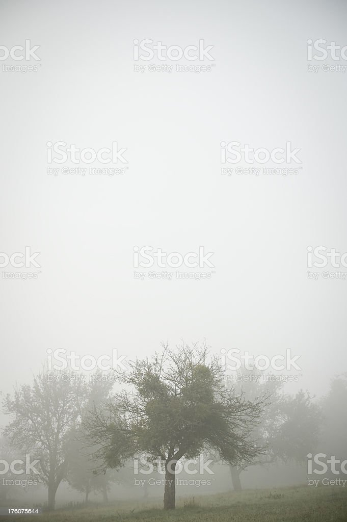 'Several apple trees in the fog, gloomy atmosphere, copy space' stock photo