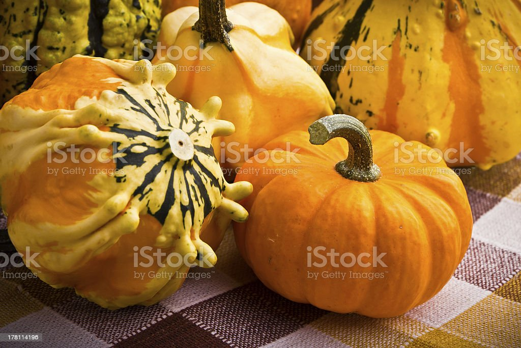 Several decorative pumpkins squash fruits royalty-free stock photo