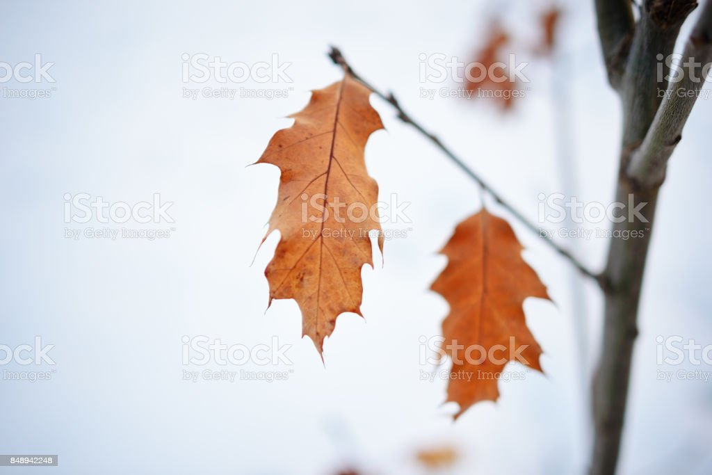 Several leaves on a branch, bronze color stock photo