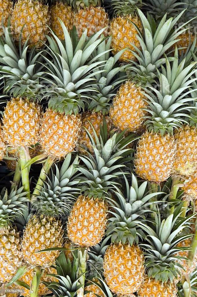 Several organic pineapples still attached to stems royalty-free stock photo