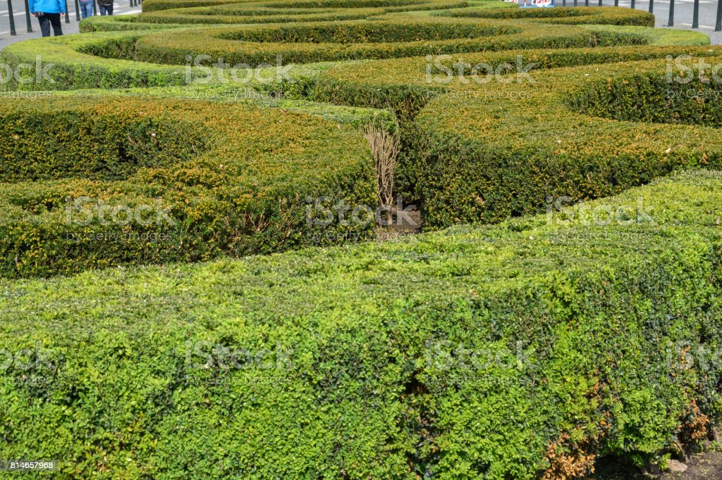 Several round shapes of bushes at Wenceslas Square in Prague, Czech Republic stock photo