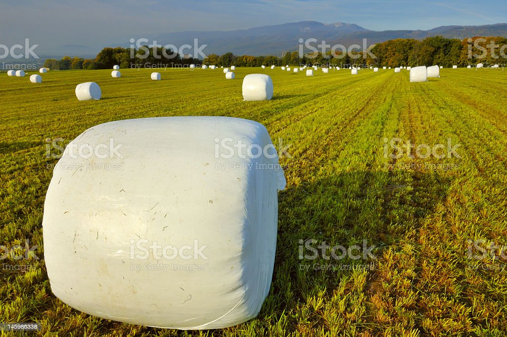 Several silage bales on a field royalty-free stock photo