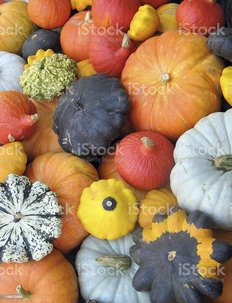 Several squashes with varying color, shape and size stock photo