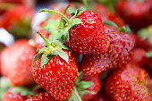 Several strawberries picked from the bush as a background