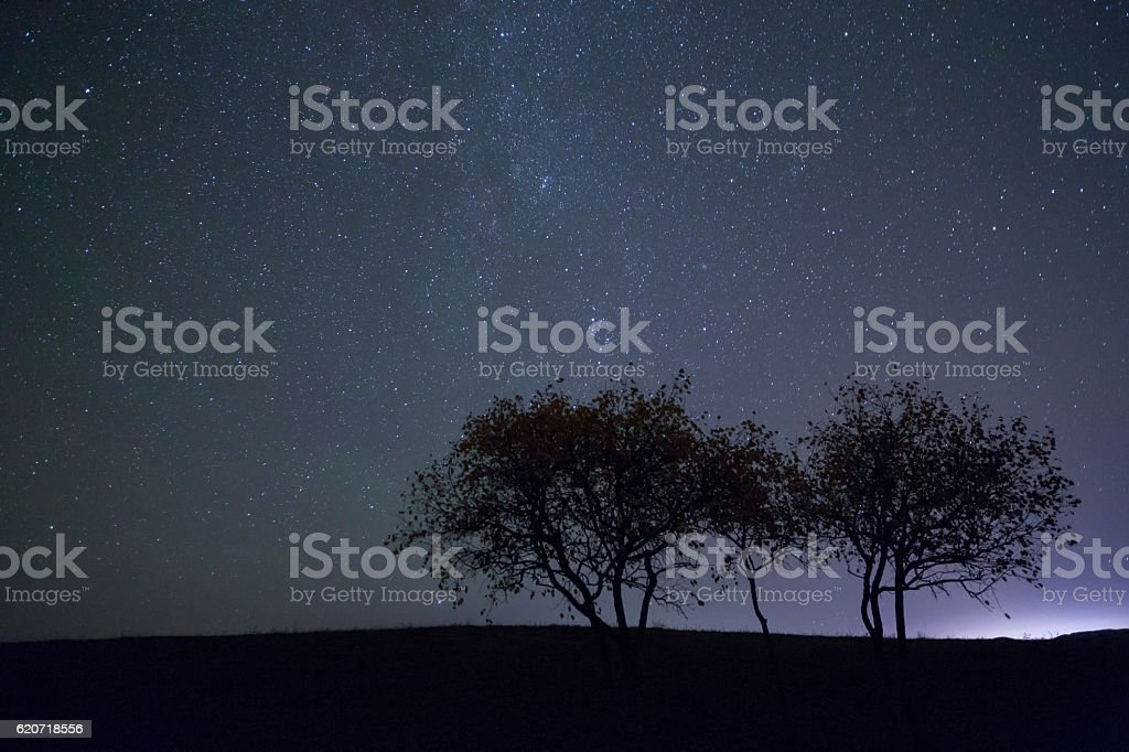 Several trees under the Milky Way stock photo