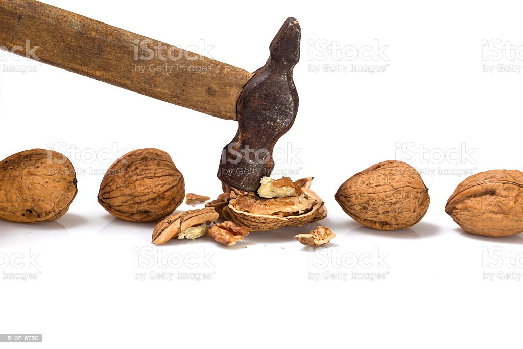 Several walnuts with a hammer. stock photo
