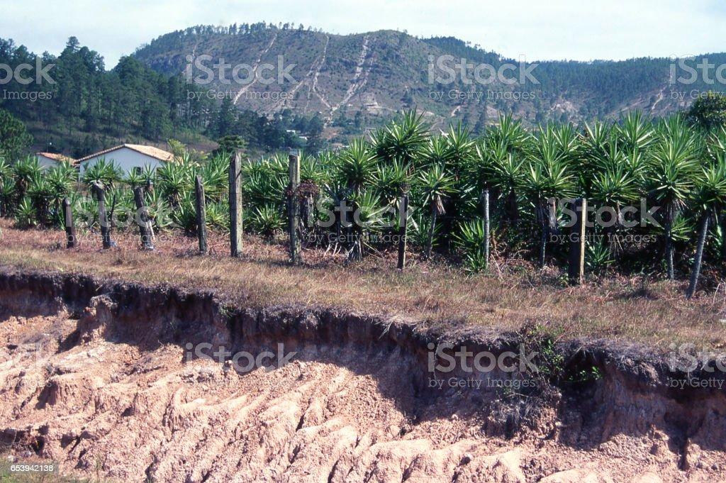 Severe erosion along fenceline and road in Valle de Angeles near Tegucigalpa Honduras stock photo