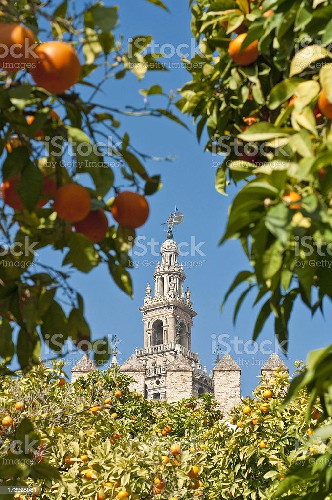 Seville La Giralda through orange grove Spain stock photo