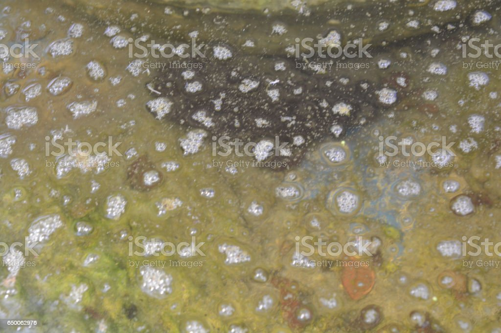 Sewage hypoxia stock photo