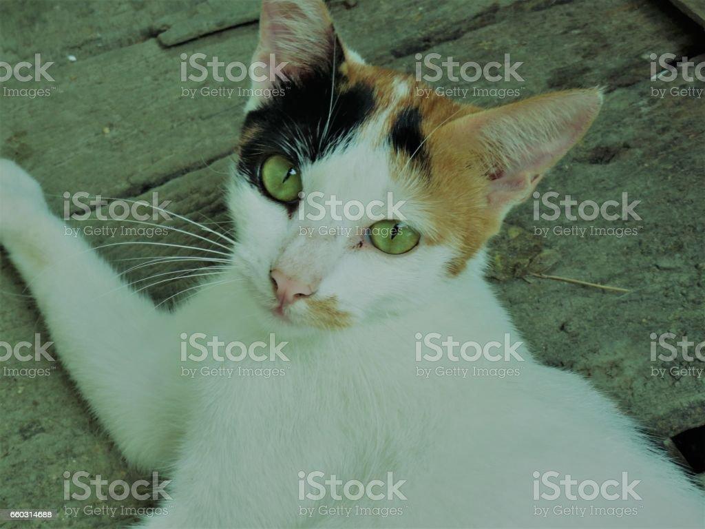 Sexy Cat stock photo