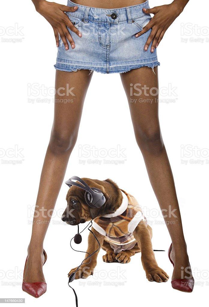 sexy dog royalty-free stock photo