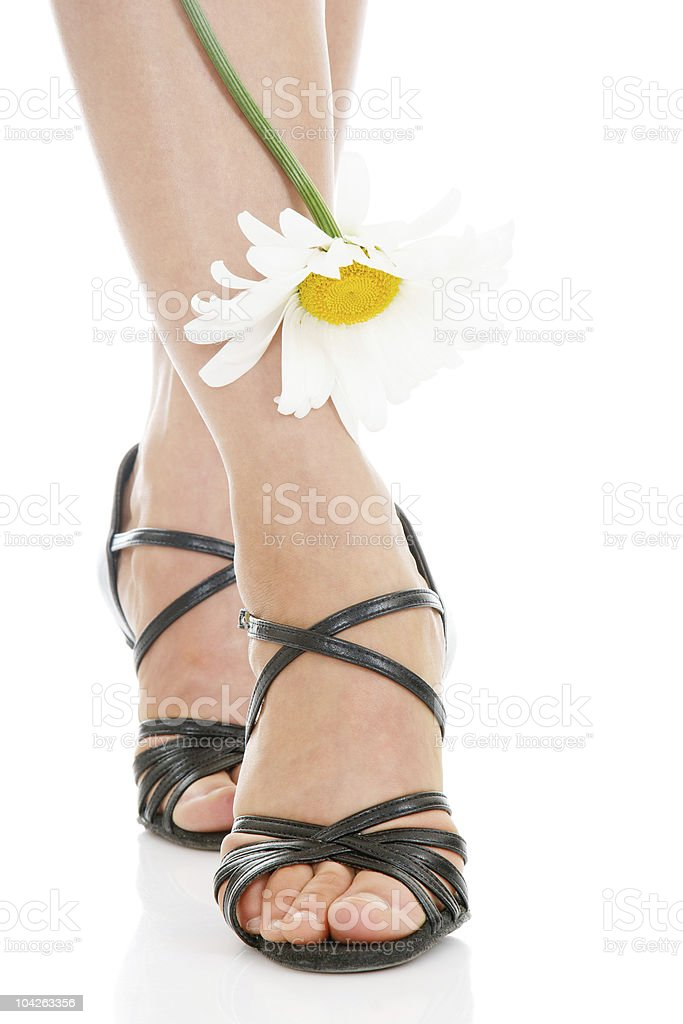 Sexy legs with camomile royalty-free stock photo