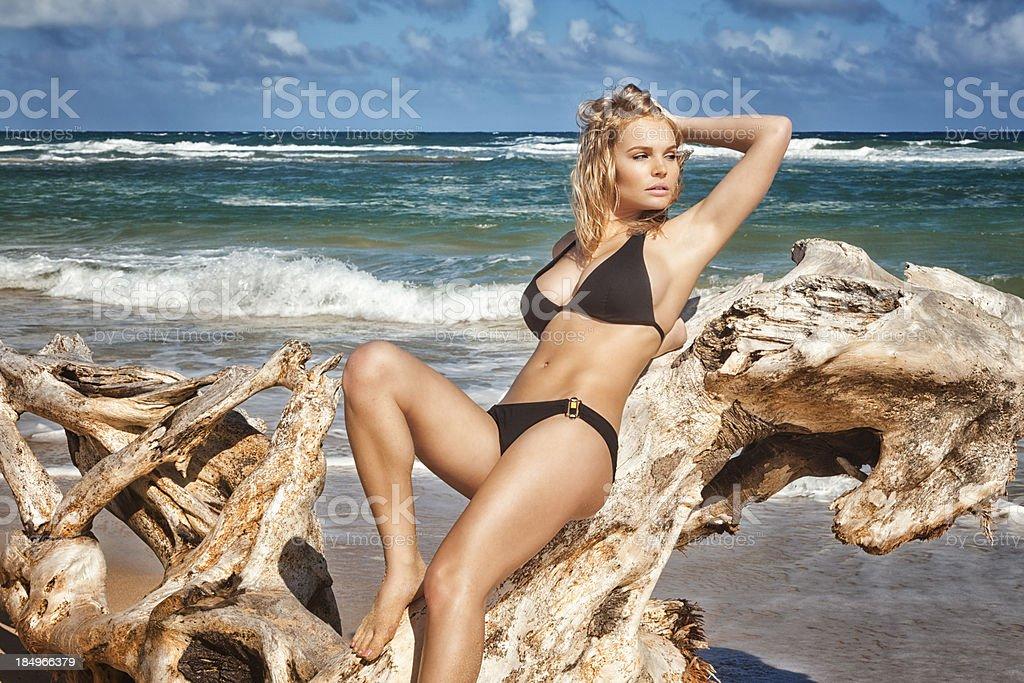 Sexy Young Woman in Black Bikini Posing on Driftwood royalty-free stock photo