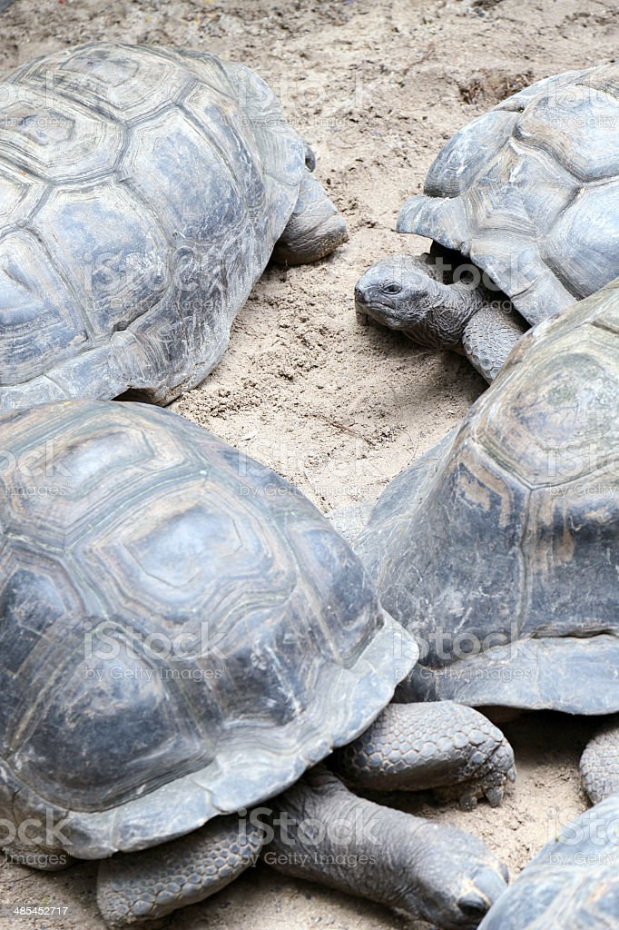 Seychelles Giant Tortoises royalty-free stock photo