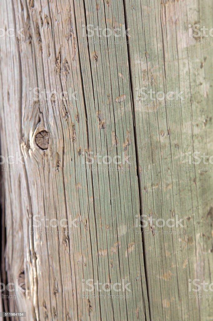 Sfondo Albero Legno Usurato Verde Giardino Parco Terrazza