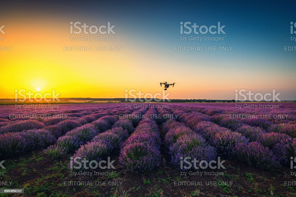 Shabla, Bulgaria - Juny 24 ,2016: Sunset lavender field andDJI Inspire 1 Pro drone UAV quadcopter which shoots 4k video and 16mp still images  and is controlled by wireless remote with a range of 2km stock photo