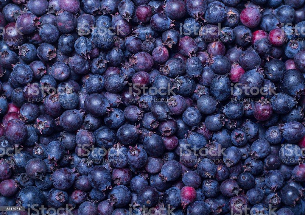 shadberry stock photo