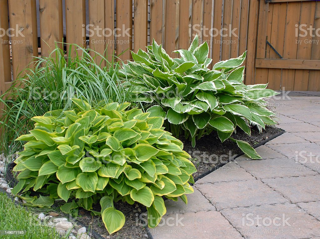 shade garden stock photo