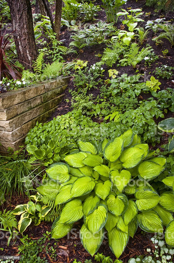 Shade Garden royalty-free stock photo