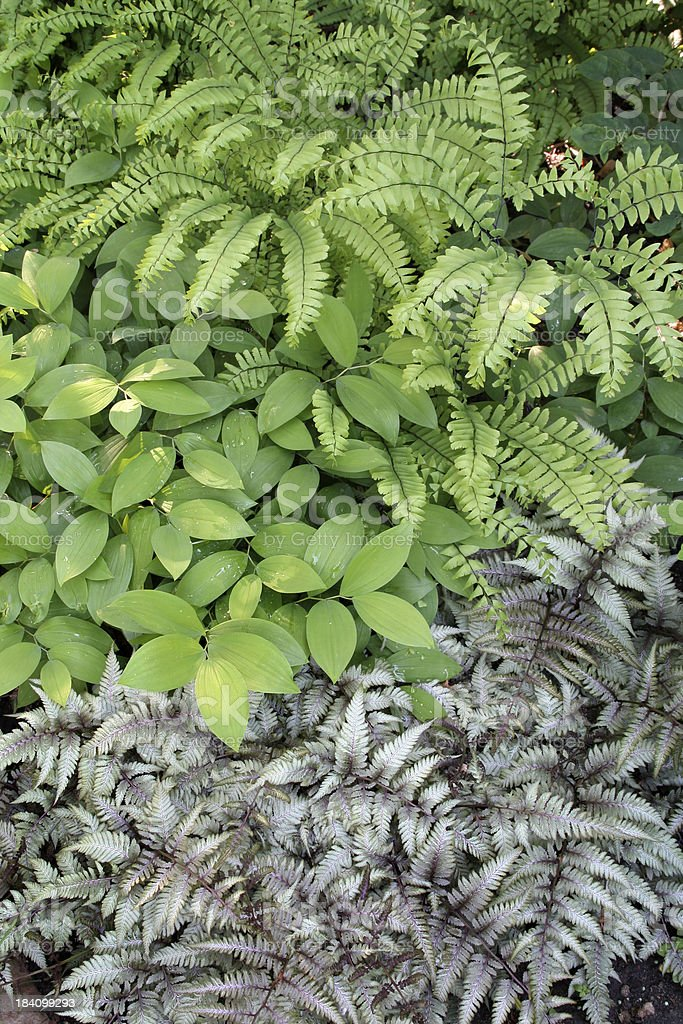 Shade Garden Vt royalty-free stock photo