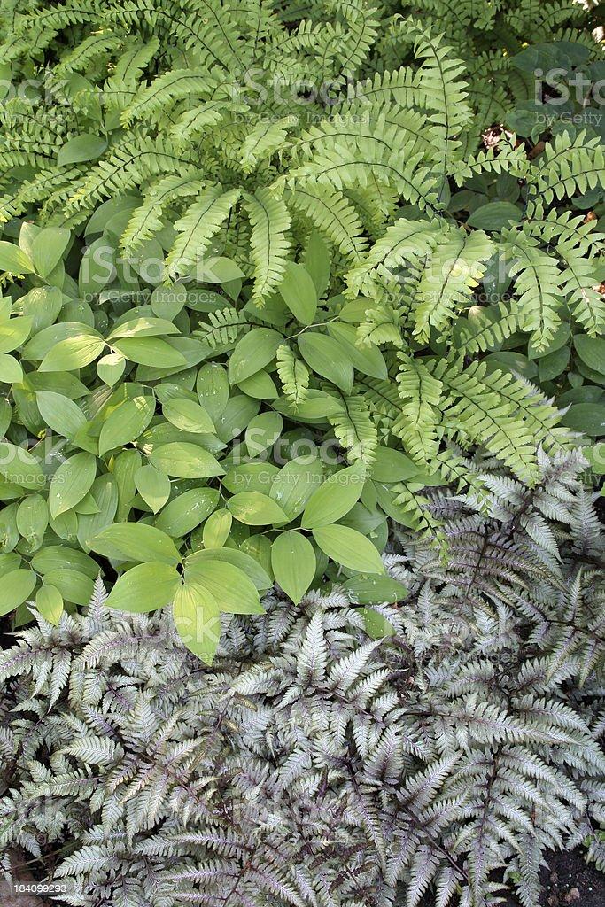 Shade Garden Vt stock photo