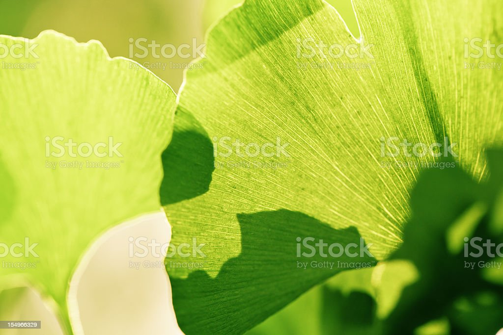 shade Leaf in spring royalty-free stock photo