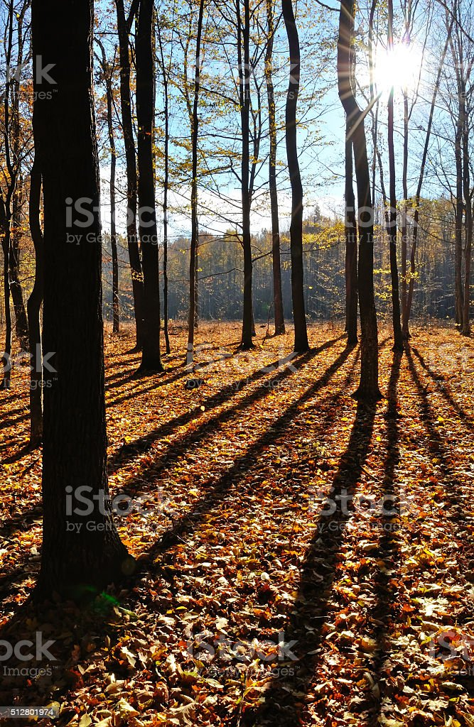 shade of trees in the forest panoramic stock photo