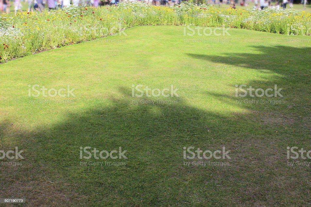 Shaded / shady fine lawn grass, freshly mown turf, wild flowers stock photo