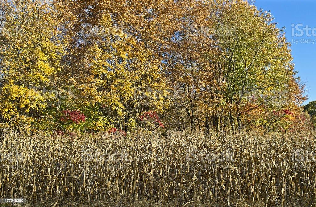 Shades of Autumn royalty-free stock photo