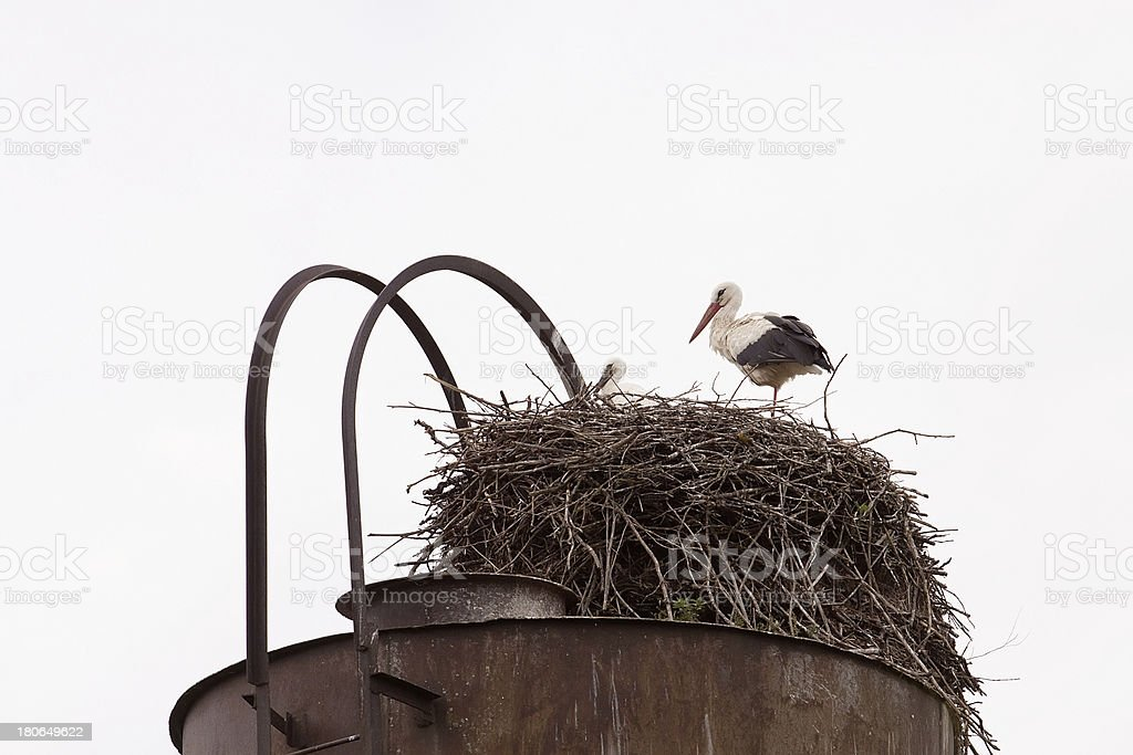 Shadoof  in the nest royalty-free stock photo