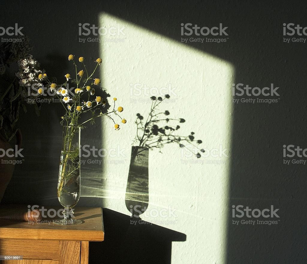 Shadow From Dying Chamomile Flowers In Vase royalty-free stock photo