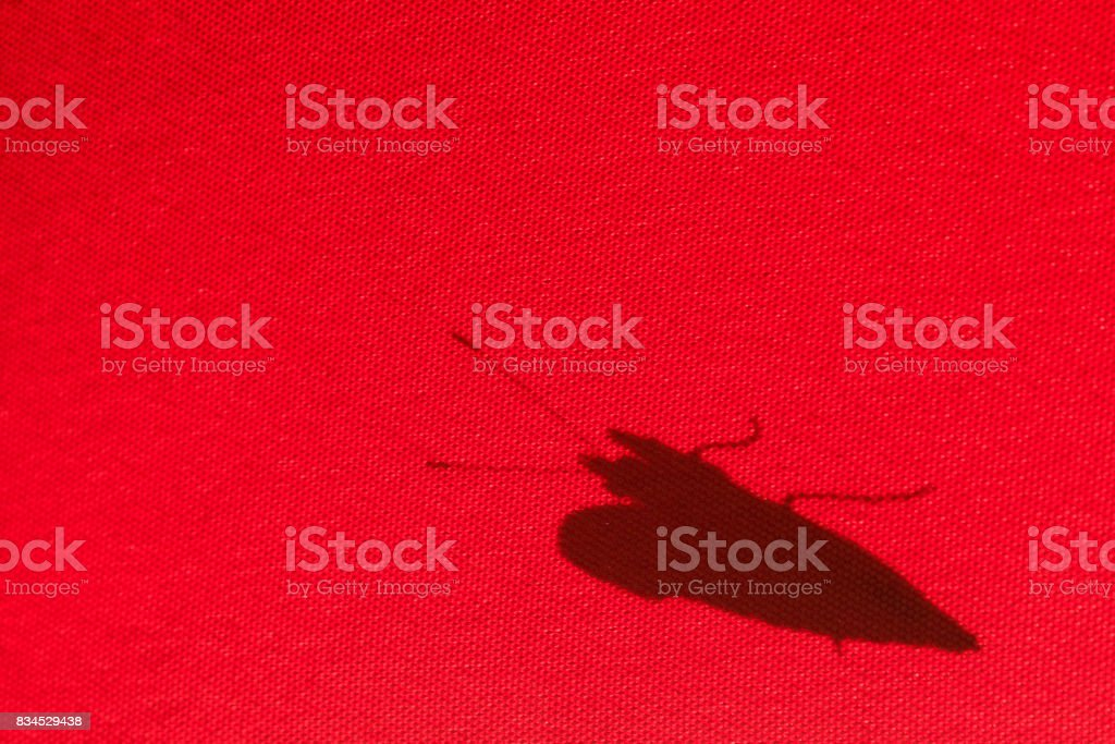 Shadow of a butterfly on a red parasol stock photo