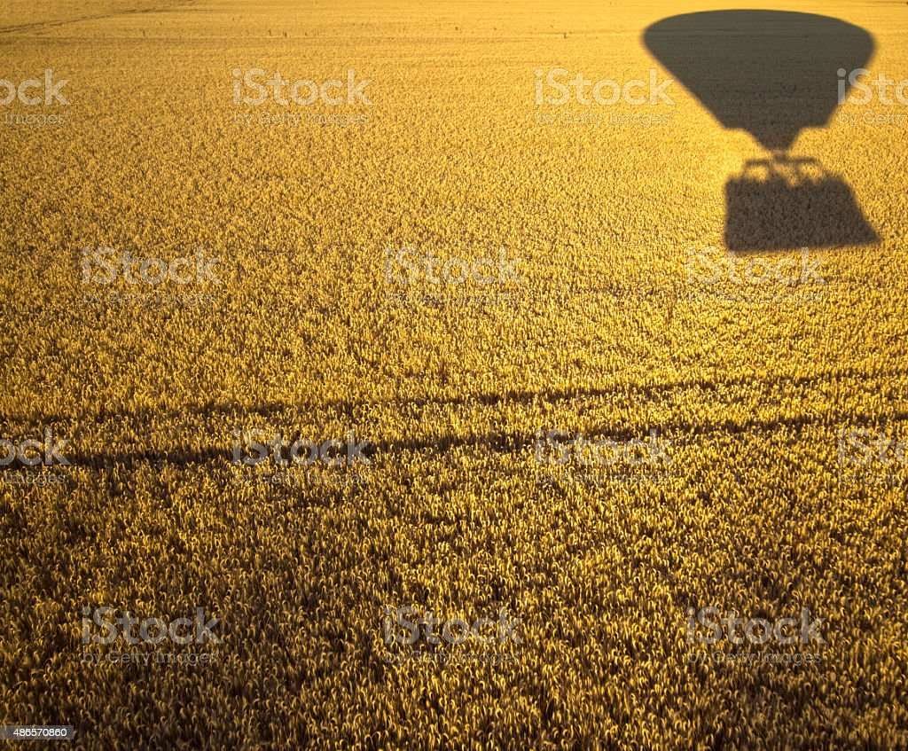 shadow of a hot air balloon across gold wheat field stock photo