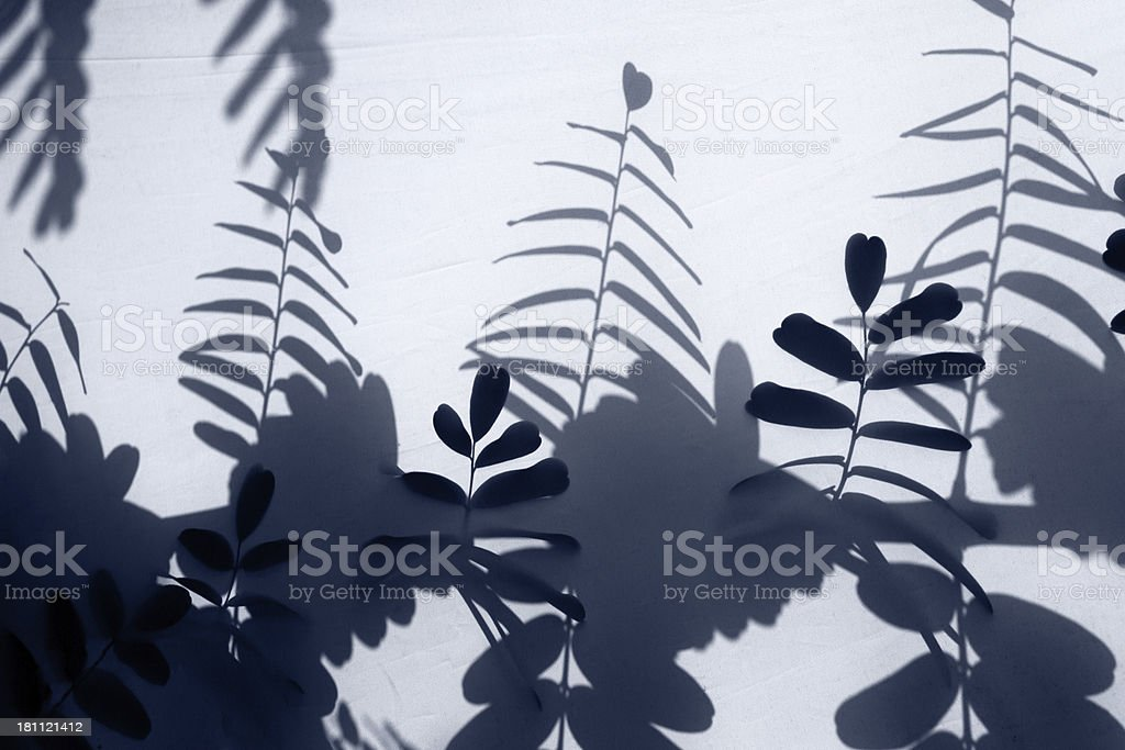 Shadow of A leaf stock photo