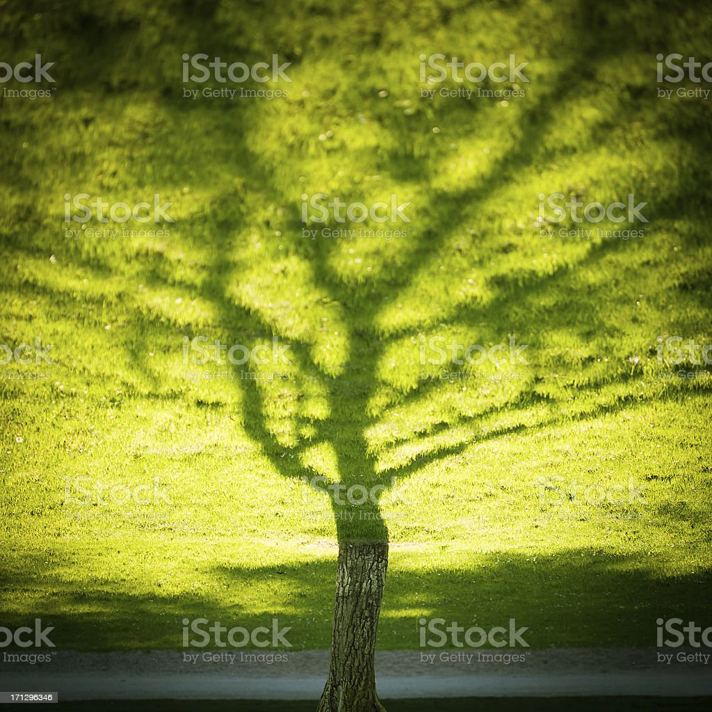 Shadow of a tree royalty-free stock photo