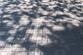 Shadow of leaf tree on brick ground