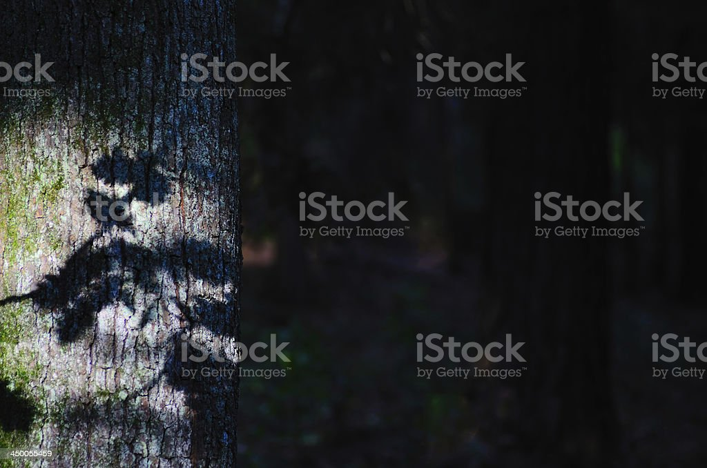shadow of leaves on tree royalty-free stock photo