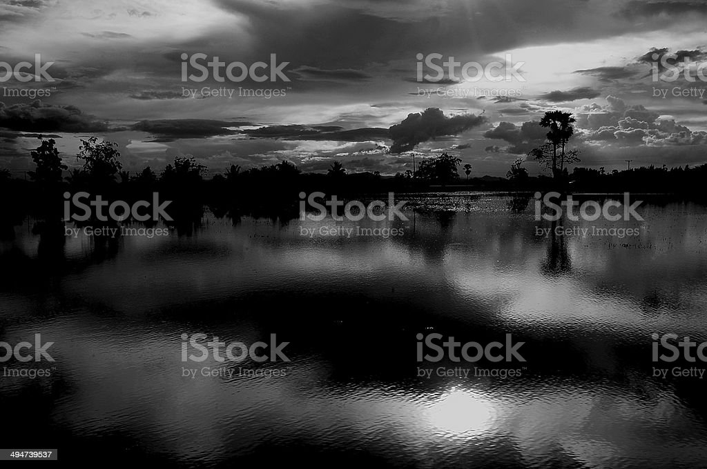 Shadow of nature at the time. stock photo
